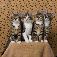 White Paw Gang by hoschie