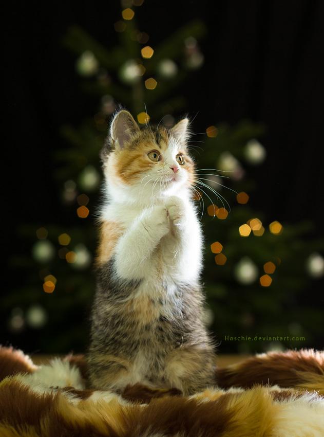 Happy Catmas by hoschie