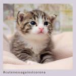 Olli - Cuteness Against Corona