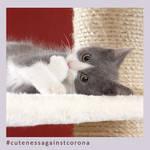Anton - Cuteness Against Corona