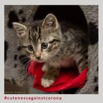 Lilly - Cuteness Against Corona