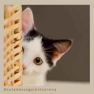 Paul - Cuteness Against Corona