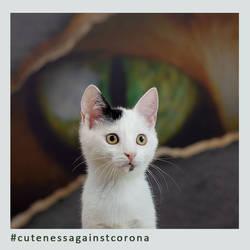 Fine - Cuteness Against Corona