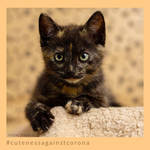 Tabby - Cuteness Against Corona