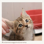Ruebchen - Cuteness Against Corona