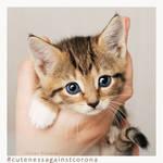 Ruebchen 2 - Cuteness Against Corona