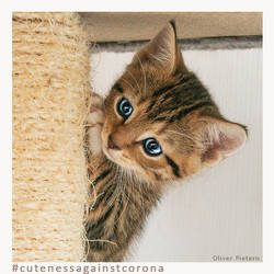 Ruebchen 4 - Cuteness Against Corona