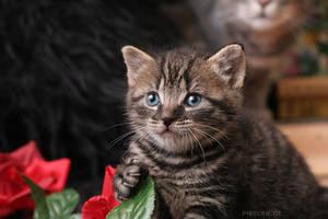 little Kitty 2 by hoschie