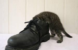 Little Alex controls my shoes by hoschie