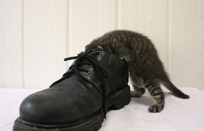 Little Alex controls my shoes by hoschie