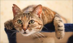 Spy-cat by hoschie