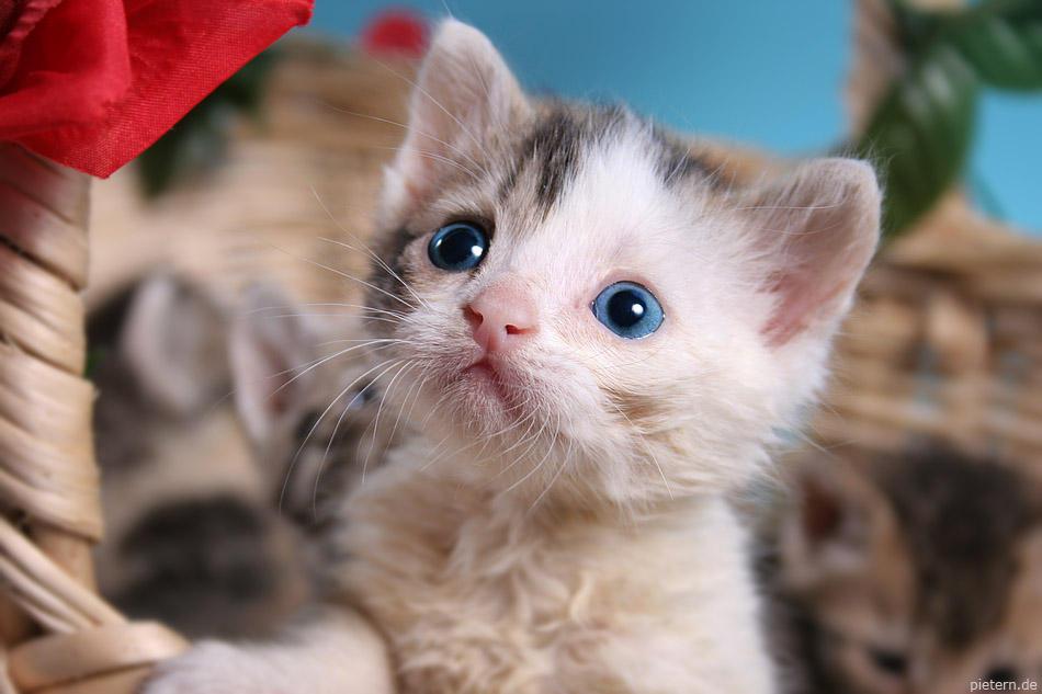Little blue eyes by hoschie