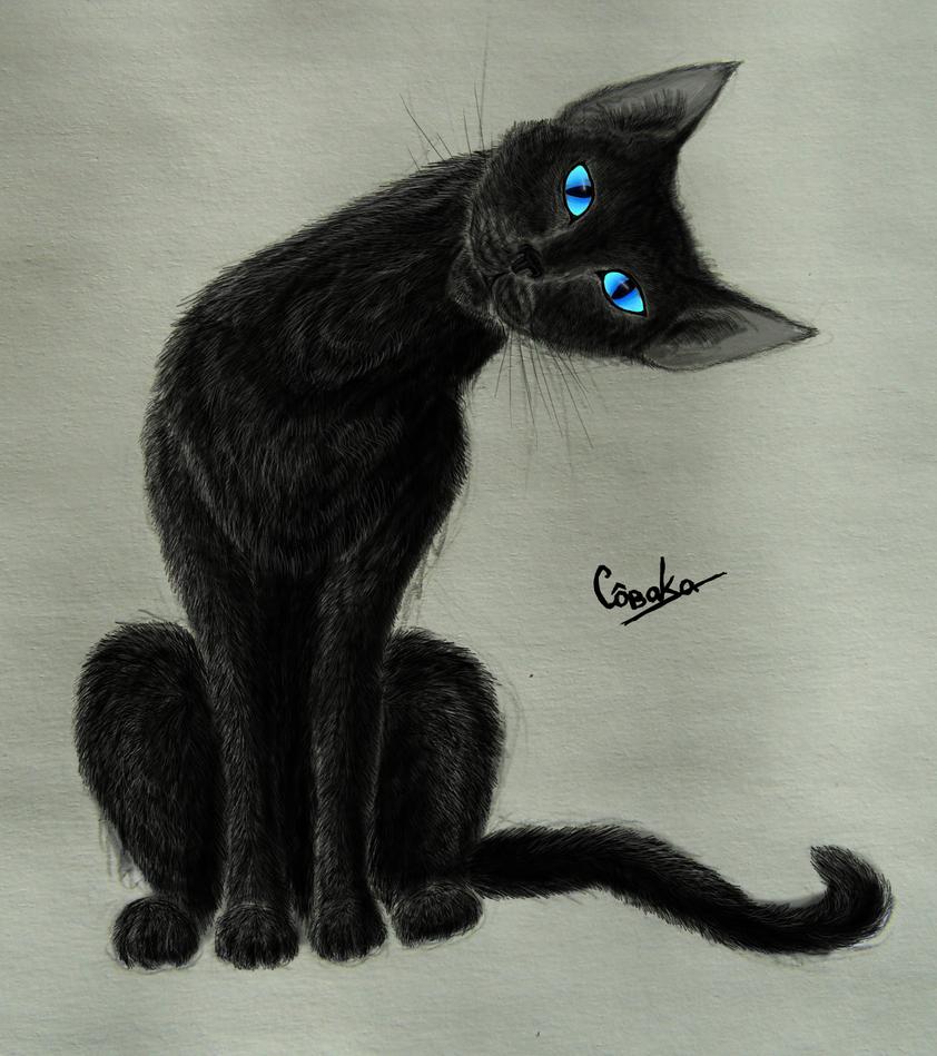 black cat by SovaKa