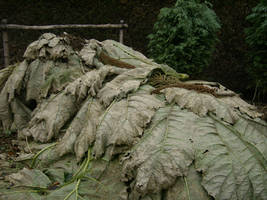 Jurassic era leaves by Stoo-stock
