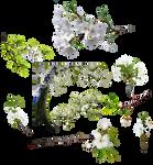 Arbol de flores blancas PNG