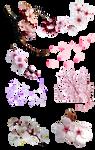 Flor de cerezo PNG