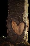 Corazon en el tronco PNG