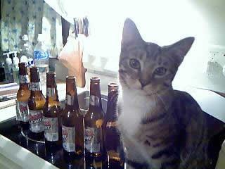 Ah Kitten Needs His Booze by silverxdragoonxx