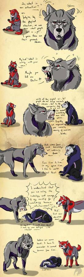 Wolf theory