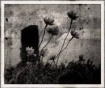 'Forlorn'