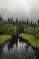 Deep In The Woods by ellegottzi