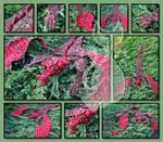 Dragon Scarf by MyntKat