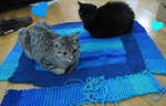 Miss Fuzzy and Sir William - Baby Blanket Making! by NoireComicsStudio