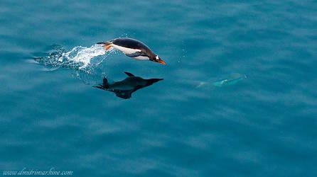 Antarctica: Penguin