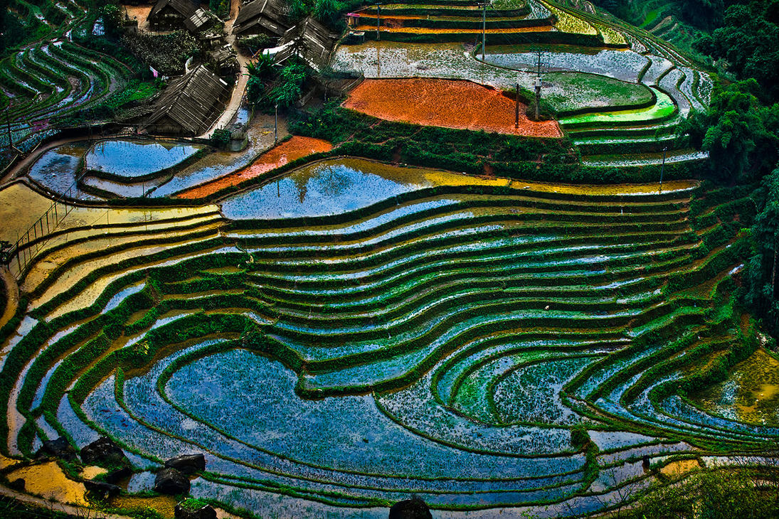 Sapa Vietnam Rice Fields by demi2004