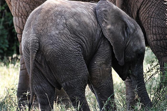 baby elephant by demi2004