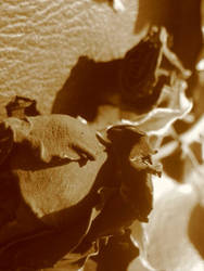 Dried Fascination
