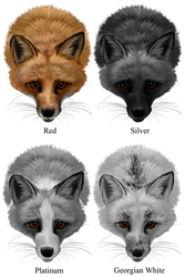 Domestic Fox Colors by NoelleMBrooks