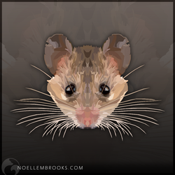 Asia Minor Spiny Mouse by NoelleMBrooks