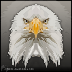 Bald Eagle by NoelleMBrooks