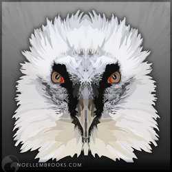 Bearded Vulture by NoelleMBrooks