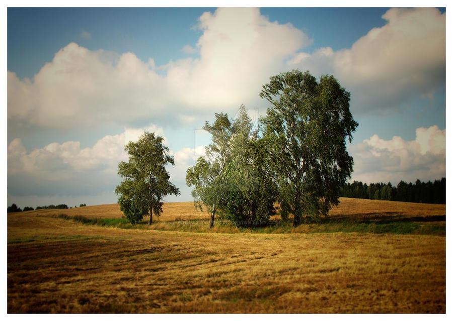 golden summer by paula2206-photo