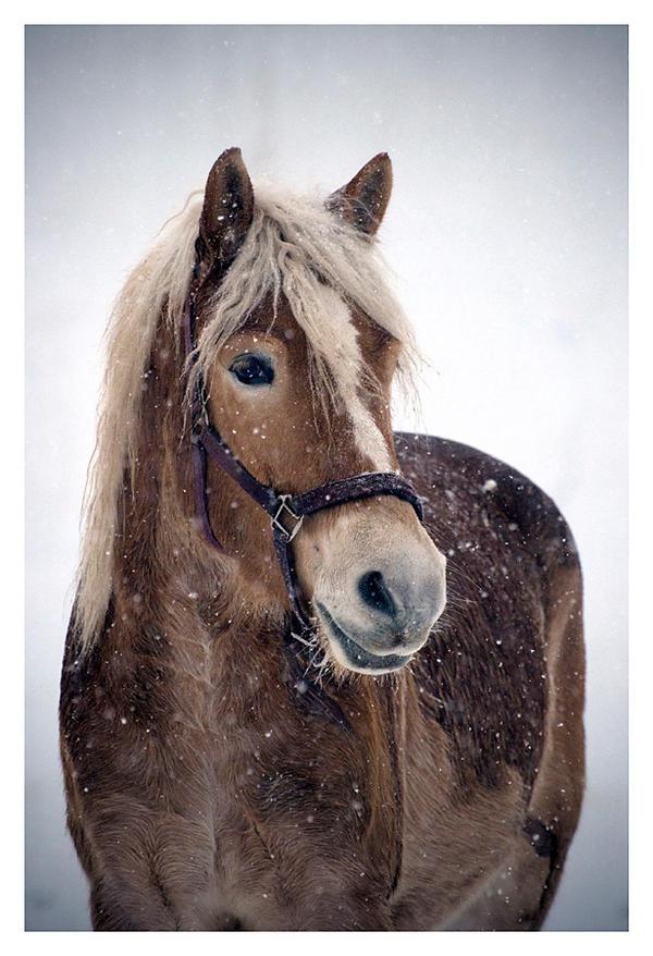 I love winter 2 by paula2206-photo