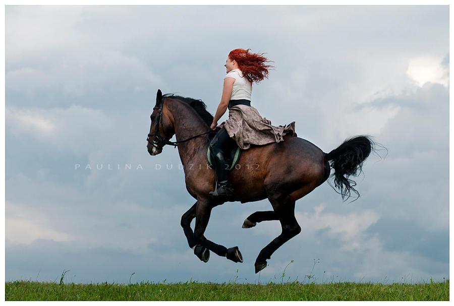 Horse Bogumil 1 by paula2206-photo