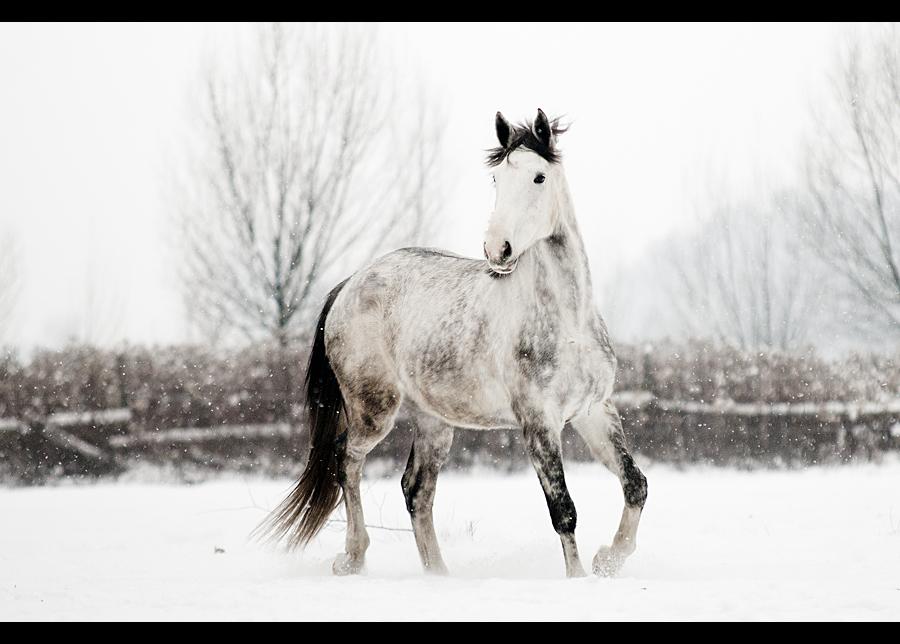 Winter 4 by paula2206-photo