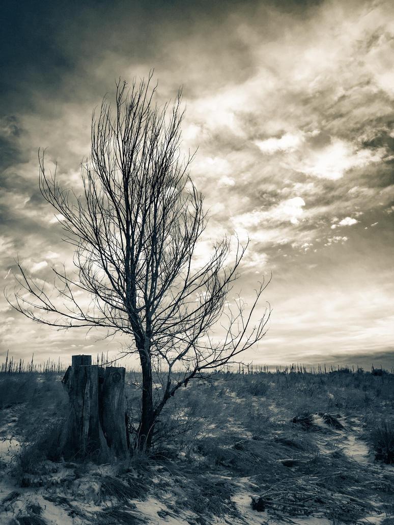 Winter's Desert by JANorlin