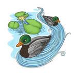 waterlilies and ducks