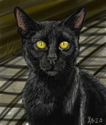 Blackkittycat