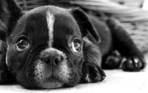 OO dog by c1p0