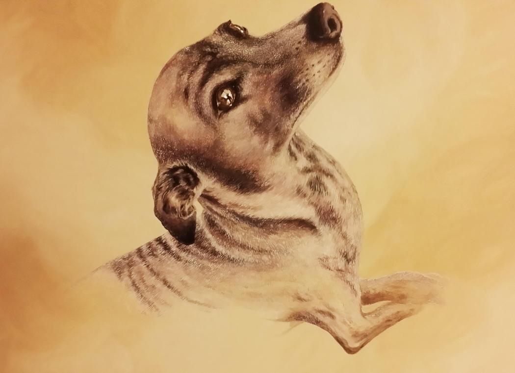 Greyhound by Siamone