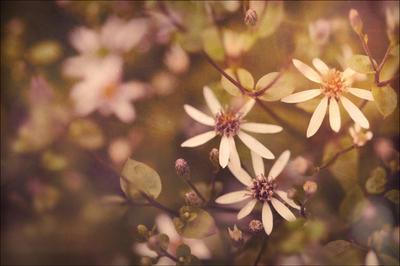 Daisy 2 by MarkGalbreath