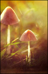 Field of Mushrooms by MarkGalbreath