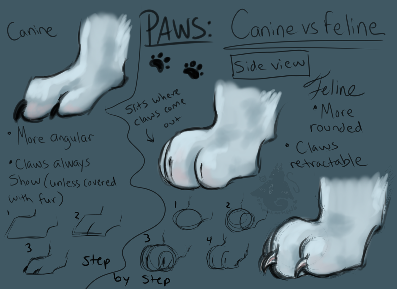 Paws: Canine VS Feline - Side View by Kasaurus on DeviantArt