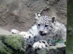 Small snow cub