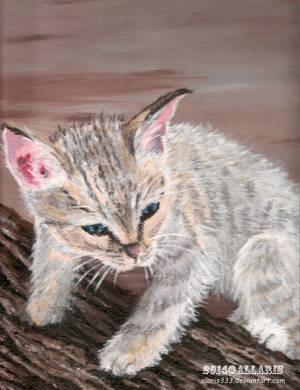 Kitten by alaris333