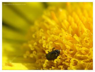pollen bath by tineoidea